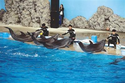 多种动物相继落户极地海洋公园